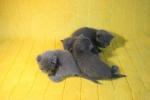 kittens25012015013.jpg
