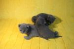 kittens25012015015.jpg