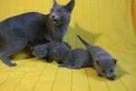 kittens25012015018.jpg