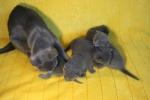 kittens25012015001.jpg