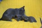 kittens25012015020.jpg