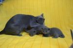 kittens25012015019.jpg