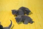 kittens25012015017.jpg