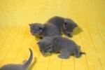 kittens25012015016.jpg