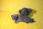 kittens25012015014.jpg