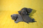 kittens25012015012.jpg