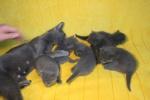 kittens25012015007.jpg