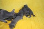 kittens25012015006.jpg