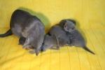 kittens25012015002.jpg