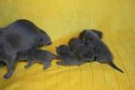 kittens25012015003.jpg