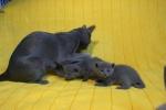 kittens25012015021.jpg