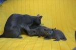 kittens25012015022.jpg