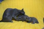 kittens25012015023.jpg