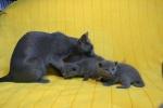 kittens25012015024.jpg