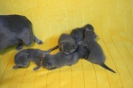 kittens25012015004.jpg