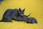 kittens25012015026.jpg