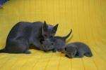 kittens25012015027.jpg