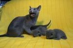 kittens25012015028.jpg