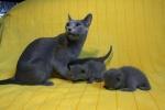 kittens25012015029.jpg