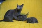 kittens25012015030.jpg
