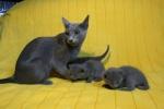 kittens25012015031.jpg