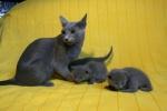 kittens25012015032.jpg