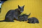 kittens25012015033.jpg