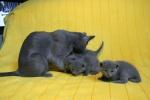 kittens25012015034.jpg