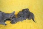 kittens25012015005.jpg