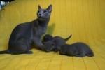 kittens25012015036.jpg