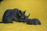 kittens25012015037.jpg