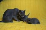 kittens25012015038.jpg