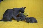 kittens25012015040.jpg