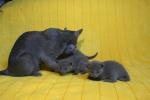 kittens25012015041.jpg