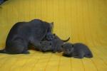 kittens25012015042.jpg
