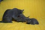 kittens25012015043.jpg