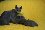 kittens25012015044.jpg