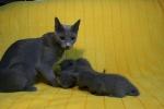 kittens25012015045.jpg